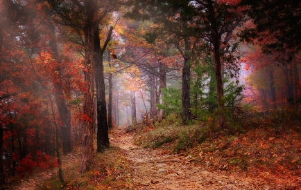 Walking-in-the-autumn-forest.jpg